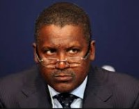 Chicken fight! Who will save Aliko Dangote from Ibikunle Amosun?