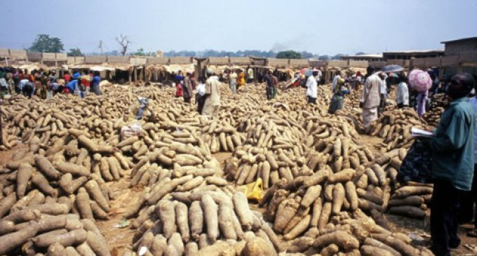 Agricultural Revolution: Nigeria to flag off yam export to Europe Thursday