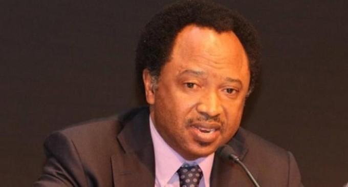 APC crisis: Oshiomhole is coming too late, we are leaving- ShehuSani